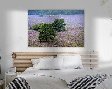 Heidevelden von Diane Schnelle