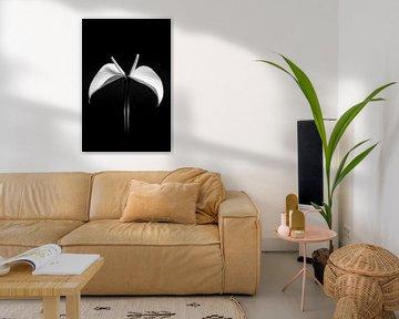 Black White Anthurium van Alice Sies