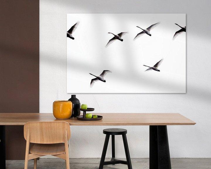 Sfeerimpressie: Zwanen in vogelvlucht (photo uncrop) van Jan Sportel Photography