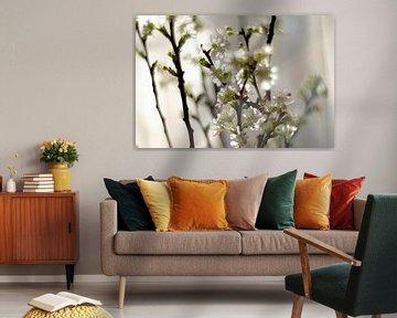 Fruhlingsblumen im Sonnenlicht von Marianna Pobedimova