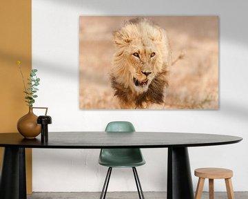 Close up van vermoeide leeuw van Simone Janssen