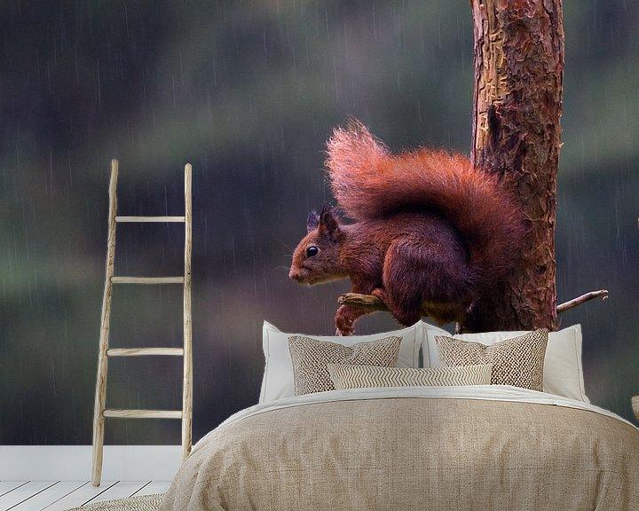Beispiel fototapete: Squirrel von Astrid Brenninkmeijer
