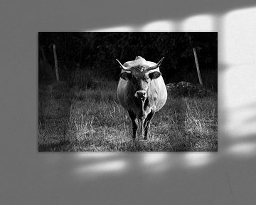 Black and White Spanish Bull or Cow von Meliza  Lopez