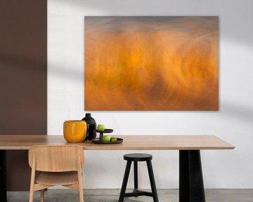 Oranje droom van David Dirkx
