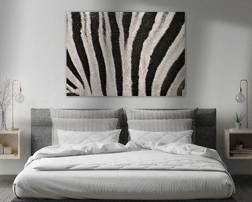 Zebra van David Dirkx