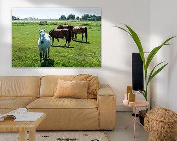 wit en bruine paarden in de wei van Compuinfoto .