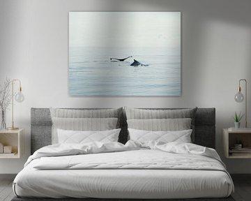 Bultrug walvis - Alaska  von Tonny Swinkels