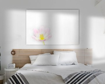 weiche rosa Tulpe von Tonny Visser-Vink
