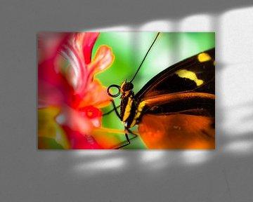 Vlinder von Bart van Woudenberg
