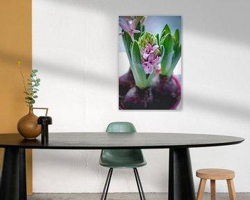 Hyacint van Linda Kooiman