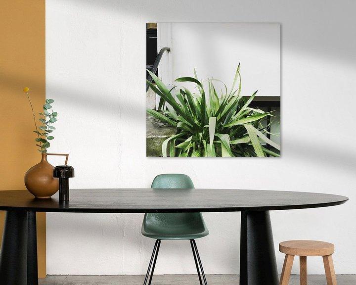 Sfeerimpressie: Plant on white wall van Keyhé Delsink
