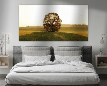 Sunrise in tree van Armand L'Ortije