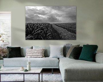 Corn, straw and clouds van Armand L'Ortije
