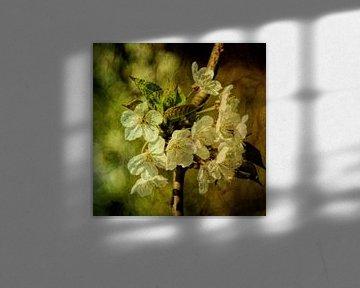 Blossom van Yvonne Blokland
