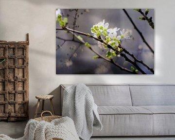 Fleurs de printemps sur Marianna Pobedimova