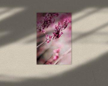 ROSE SPANGLES no1  van Pia Schneider