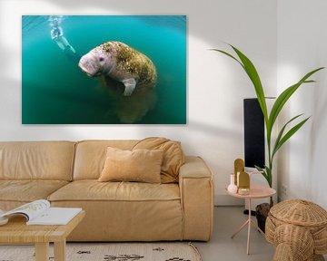 Freediven met een lamantijn