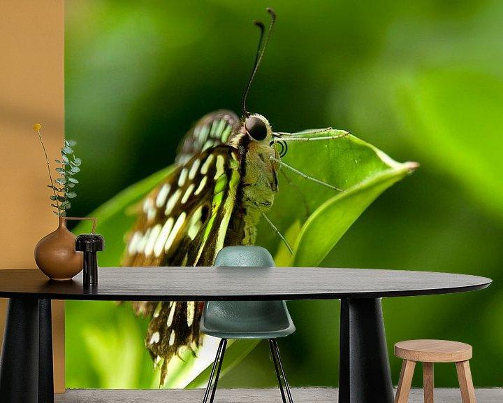 Impression: Vlinder sur Miranda van Hulst