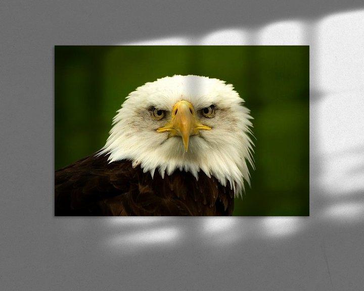 Impression: Roofvogel sur Miranda van Hulst