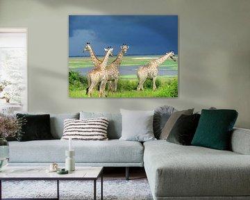 Giraffen voor de storm sur Kim van de Wouw
