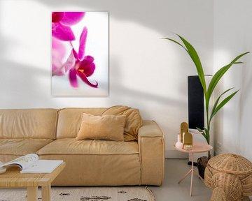 orchidee 01 von Elma van Putten