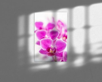 orchidee 02 von Elma van Putten