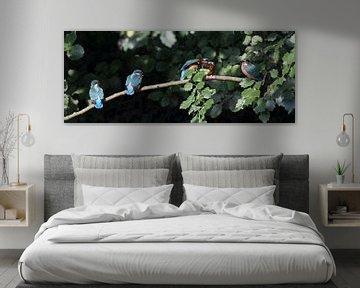 Vijf ijsvogels op een tak van Jani Moerlands
