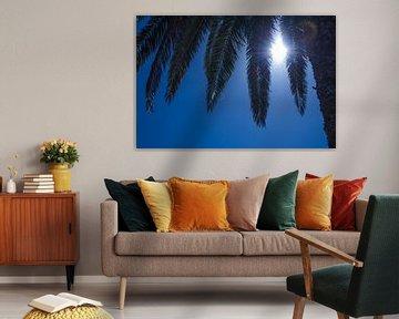 Palm van Onno van Kuik