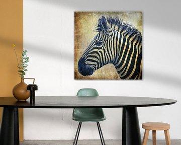 Zebra Portrait PopArt von Angela Dölling