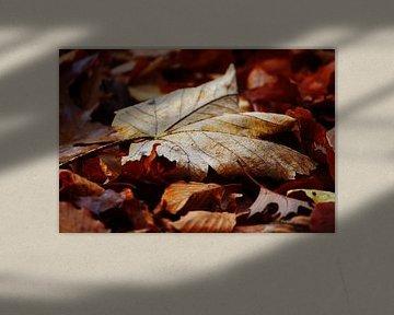 golden fall III van Meleah Fotografie