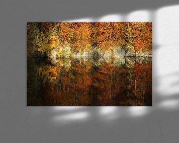 golden fall  van Meleah Fotografie