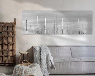 Bamboe staken van Bas van Rooij
