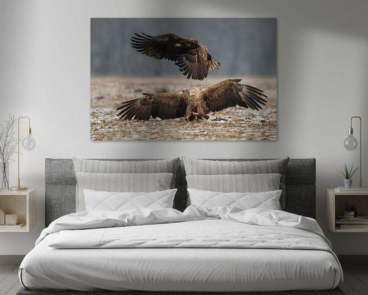 Impression: White tailed eagle sur Menno Schaefer