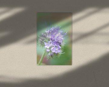 Pastel van Judith van der Graaf