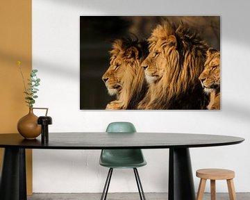Der König der Löwen sur Ron van Zoomeren
