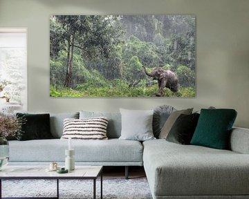Aziatische Olifant in de regen in Thailand van Fotojeanique .