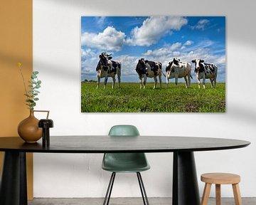 Kühe im Polder 01 sur Peter Bongers