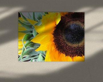 Sunflowers van Leonie Versantvoort