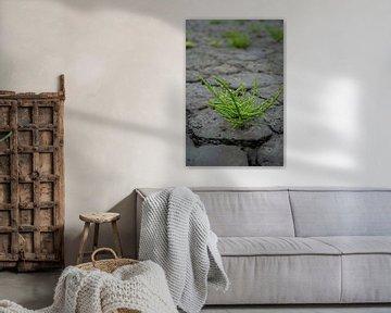 Salicorne 2 sur Zeeland op Foto