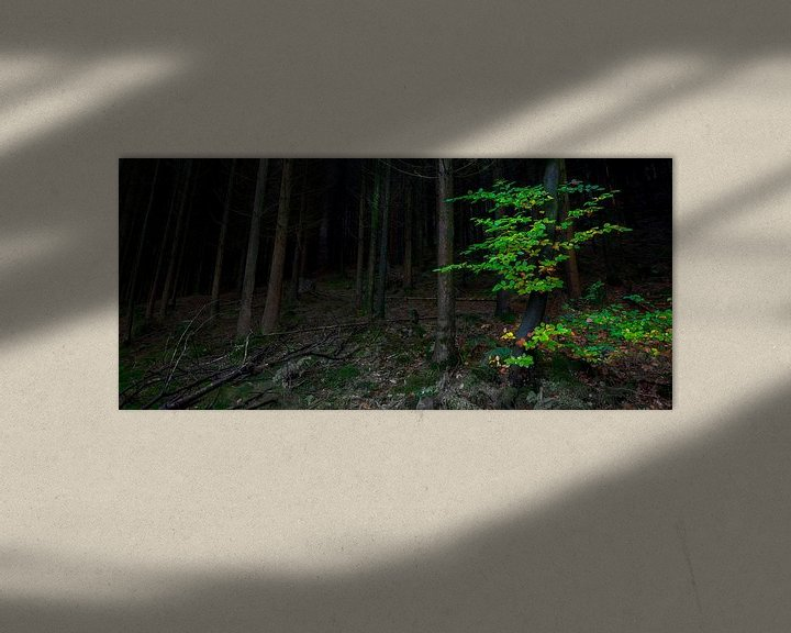 Sfeerimpressie: Donker bos, groen accent van Peter Bolman