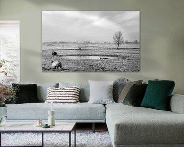 Schaap in het polderlandschap van MS Fotografie | Marc van der Stelt