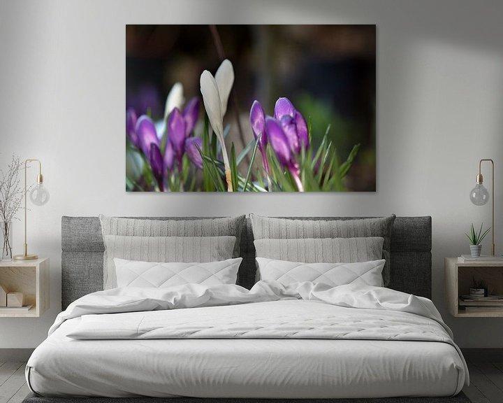 Sfeerimpressie: Tere krokussen in een tuin van Fleur Halkema
