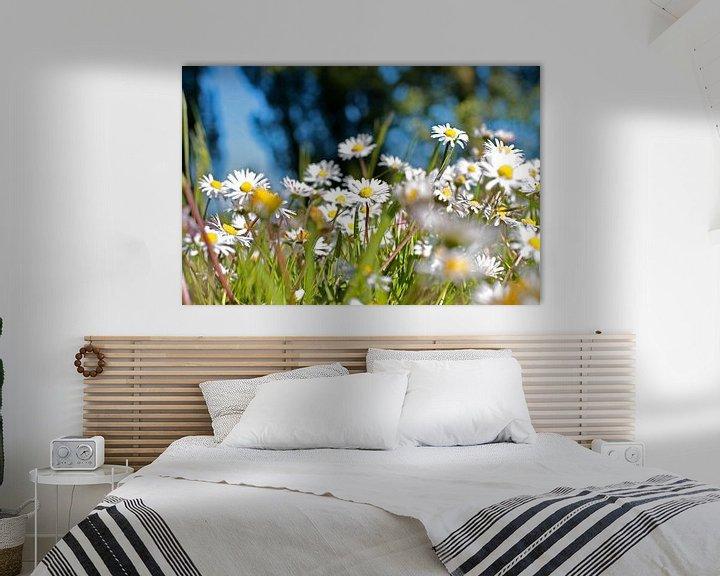 Sfeerimpressie: Een veld vol madeliefjes van Fleur Halkema