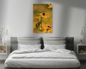 Zweefvliegen op Coreopsis (Meisjesogen) von Jan Piet Hartman