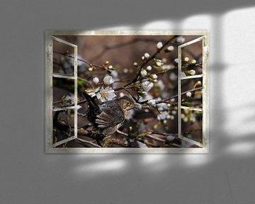 Fenêtre - fleurs de cerisier sauvage avec Blackbird sur Christine Nöhmeier