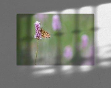 ringoogparelmoervlinder in de ochtend van Francois Debets