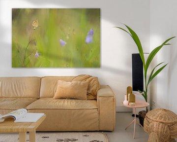 bruine vuurvlinder met ruimte van Francois Debets