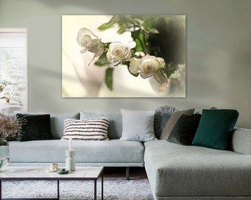 Weiße Rosen von Marianna Pobedimova