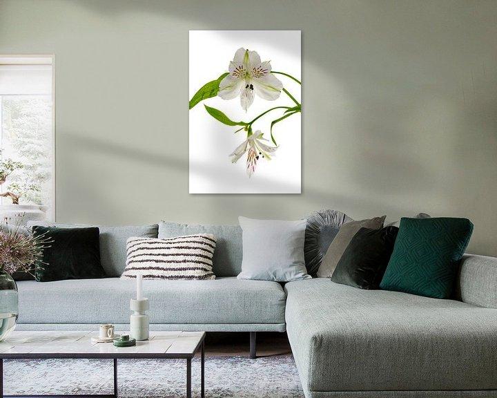 Sfeerimpressie: witte alstroemeria  bloemen  van Compuinfoto .