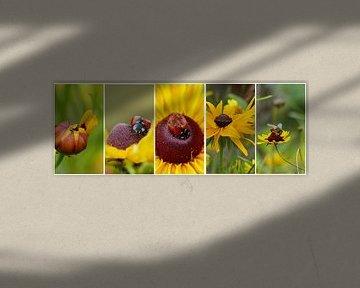 Collage van gele bloemen met lieveheersbeestje en bijtje van Gonnie van Hove